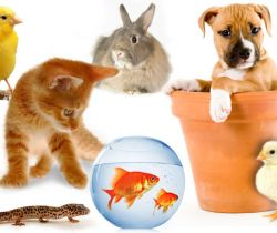 Pets (Exotic, expensive, celebrity pets…)