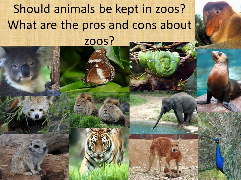 are zoos bad essay I'm no big animals rights campaigner, but i do trust facts delivered by experts, and the facts tell me that zoos are just a really terrible idea.